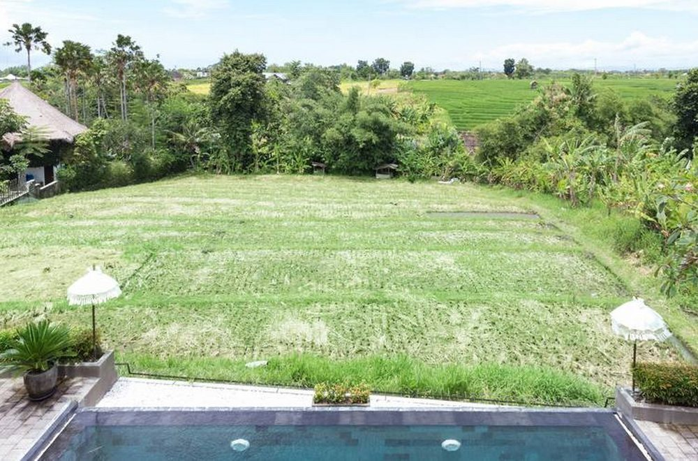 The rice fields at villa Subak after harvesting